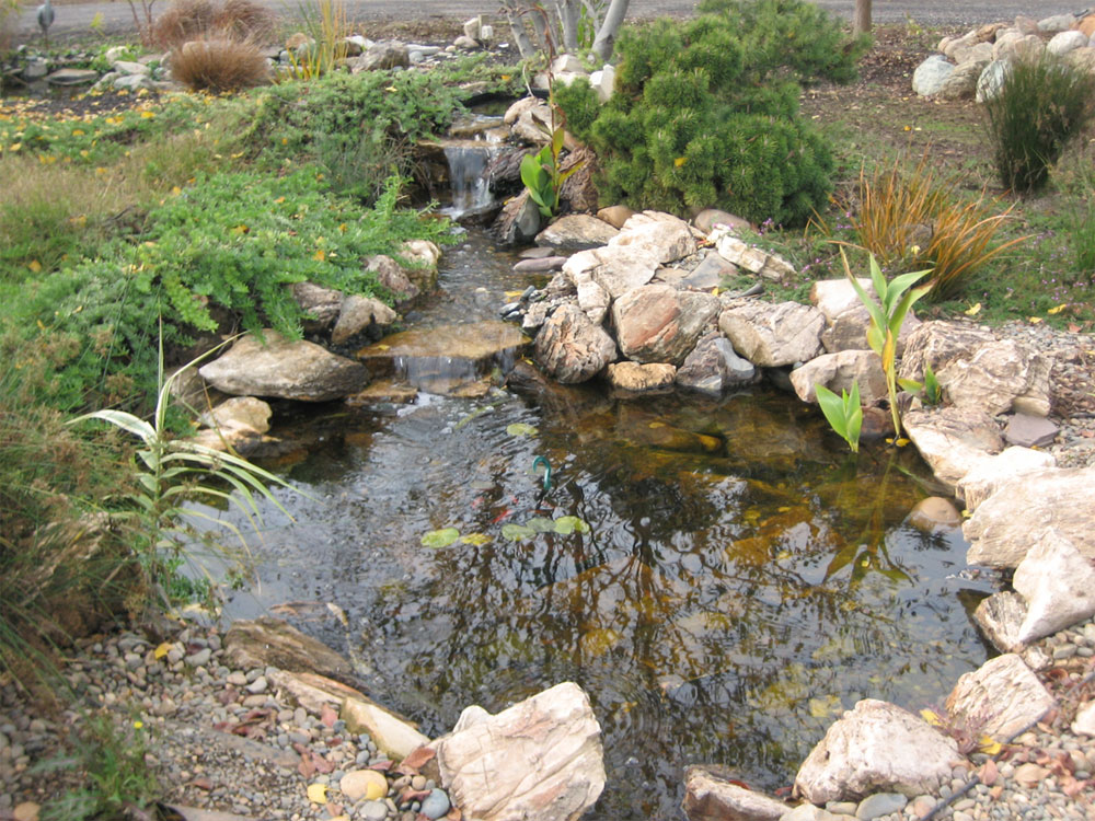 Arreola landscaping for Ponds and water features